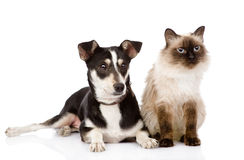 Cat and puppy sitting in front. looking away. isol Stock Photo