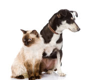 Cat and puppy sitting in front. looking away.  on  Royalty Free Stock Photos