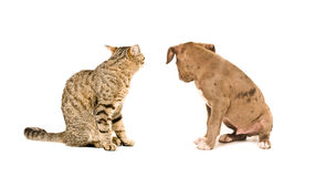Cat and puppy sitting with his back Royalty Free Stock Images
