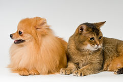 Cat and puppy  in studio Stock Images