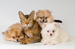 Cat and puppy in studio. On a neutral background stock image