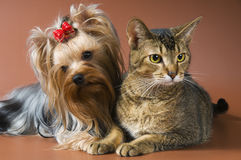 Cat and puppy studio. On a neutral background Stock Photos