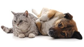 Cat and puppy. Cat and puppy on a white background stock images