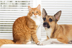 Cat on and puppy. Cat and puppy on window royalty free stock photos