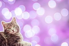 Cat on a purle background with bokeh Stock Photos