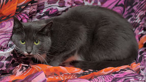 Cat on a purple background Stock Image