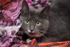 Cat on a purple background Stock Photography