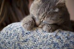 Cat purring Stock Images