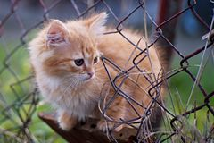 Cat - pussycat in the garden. Small cat in the garden - cat on the fence stock images