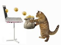 Cat puts bitcoins in a bag 2. The cat puts the bitcoins into a sack which pops up from the laptop. White background stock photos