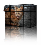 Cat puzzle Stock Photo
