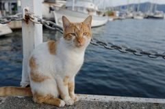 Cat on the quay. Cat sitting on the quay against fisher boats Stock Images