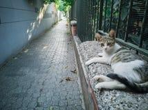 26-Cat que relaxa Foto de Stock