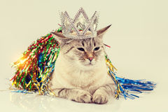 Cat Queen Royalty-vrije Stock Fotografie