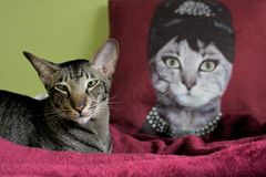A cat and the queen Royalty Free Stock Image