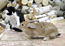 Cat and rabbit. Cat keeps company with rabbit Royalty Free Stock Photos