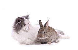 Cat and rabbit. Isolated on white background Royalty Free Stock Photos