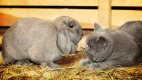 Cat and Rabbit Stock Photos