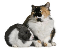 Cat and rabbit sitting and looking away. Cat and rabbit sitting in front of white background Royalty Free Stock Photo