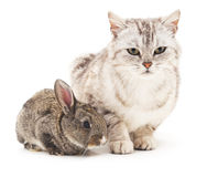 Cat and rabbit. Cat and rabbit on a white background Royalty Free Stock Photos
