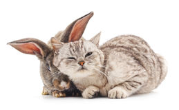 Cat and rabbit. Cat and rabbit on a white background Royalty Free Stock Image