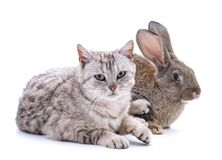 Cat and rabbit. Cat and rabbit on a white background Royalty Free Stock Images