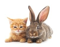Cat and rabbit. Cat and rabbit on a white background Stock Photos