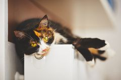 Cat on the radiator Royalty Free Stock Photography
