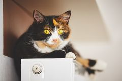 Cat on the radiator Stock Photography