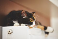 Cat on the radiator Royalty Free Stock Images