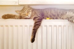 Cat on a radiator Royalty Free Stock Images