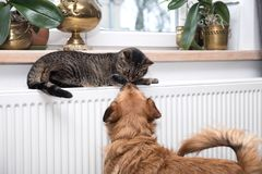 Cat on the radiator, warm, Tabby cat lying a warm radiator. A tiger tabby cat relaxing on a warm radiator, Tabby cat lying a warm radiator, cat lies on the stock images