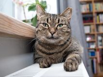 Cat on the radiator, warm, Tabby cat lying a warm radiator. A tiger tabby cat relaxing on a warm radiator, Tabby cat lying a warm radiator, cat lies on the royalty free stock photography