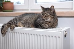 Cat on the radiator, warm, Tabby cat lying a warm radiator. A tiger tabby cat relaxing on a warm radiator, Tabby cat lying a warm radiator, cat lies on the royalty free stock image