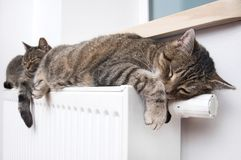 Cat on the radiator, warm, Tabby cat lying a warm radiator. A tiger tabby cat relaxing on a warm radiator, Tabby cat lying a warm radiator, cat lies on the royalty free stock photo