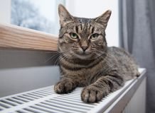 Cat on the radiator, warm, Tabby cat lying a warm radiator. A tiger tabby cat relaxing on a warm radiator, Tabby cat lying a warm radiator, cat lies on the royalty free stock photos