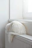Cat on the radiator Royalty Free Stock Photos