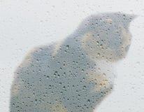 Cat And Rain Photos stock
