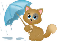 Cat in the rain Royalty Free Stock Photos