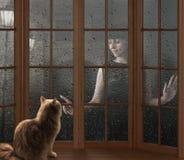 Cat and rain Stock Image