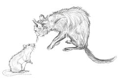 Cat and rat. The drawing cat and rat by pencil royalty free illustration
