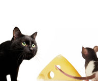 Cat and rat Stock Photo