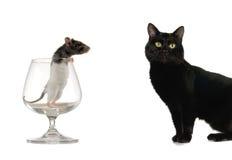 Cat and rat Royalty Free Stock Photos