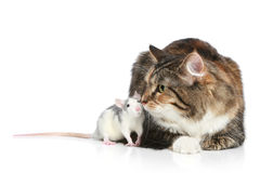 Cat and rats resting Royalty Free Stock Photography
