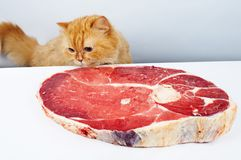 Cat reach the meat Stock Photos