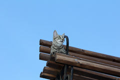 Cat reached certain heights. Cat resting on a bench on a clear day Stock Photo