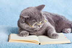 Cat reader Stock Photos