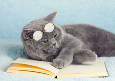 Cat reader Stock Photography
