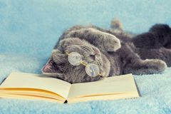 Cat reader Royalty Free Stock Photo