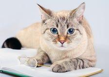 Cat reader Stock Photo